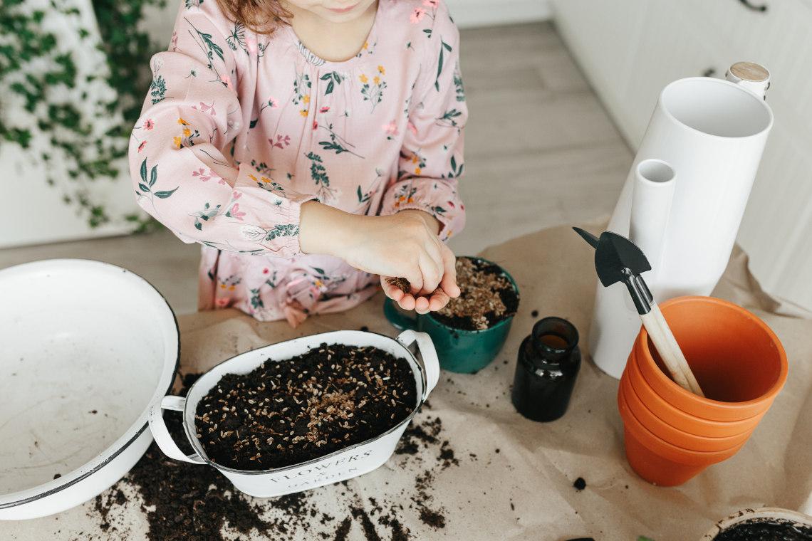 Plant kitchen herbs